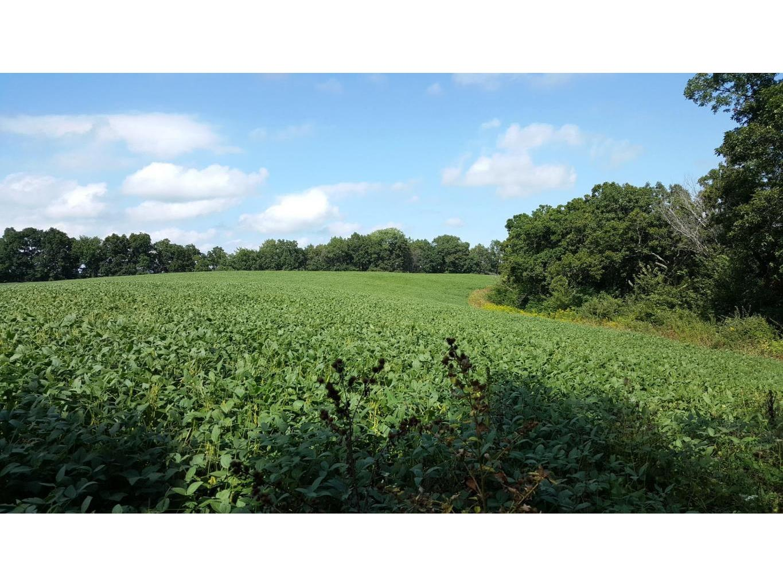 Upper Bean Field