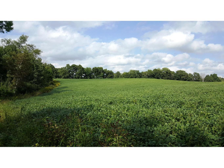 Upper Bean Field2