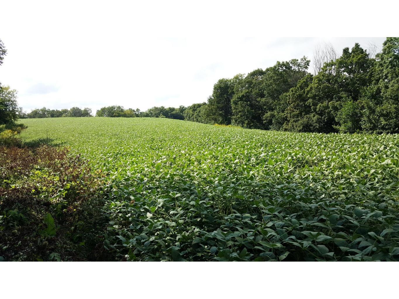 Upper Bean Field3