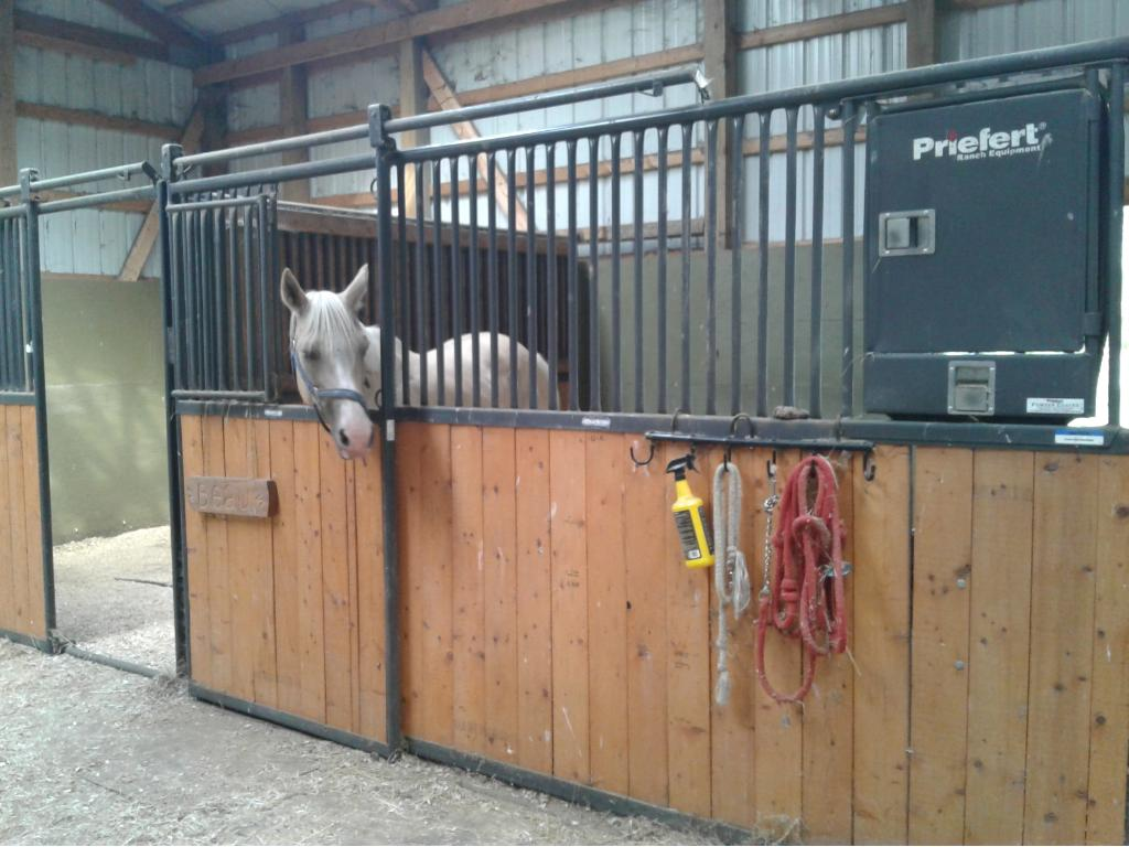 Professional horse stall has mats to keep the stall clean and as you can see it is all set up for your horse!
