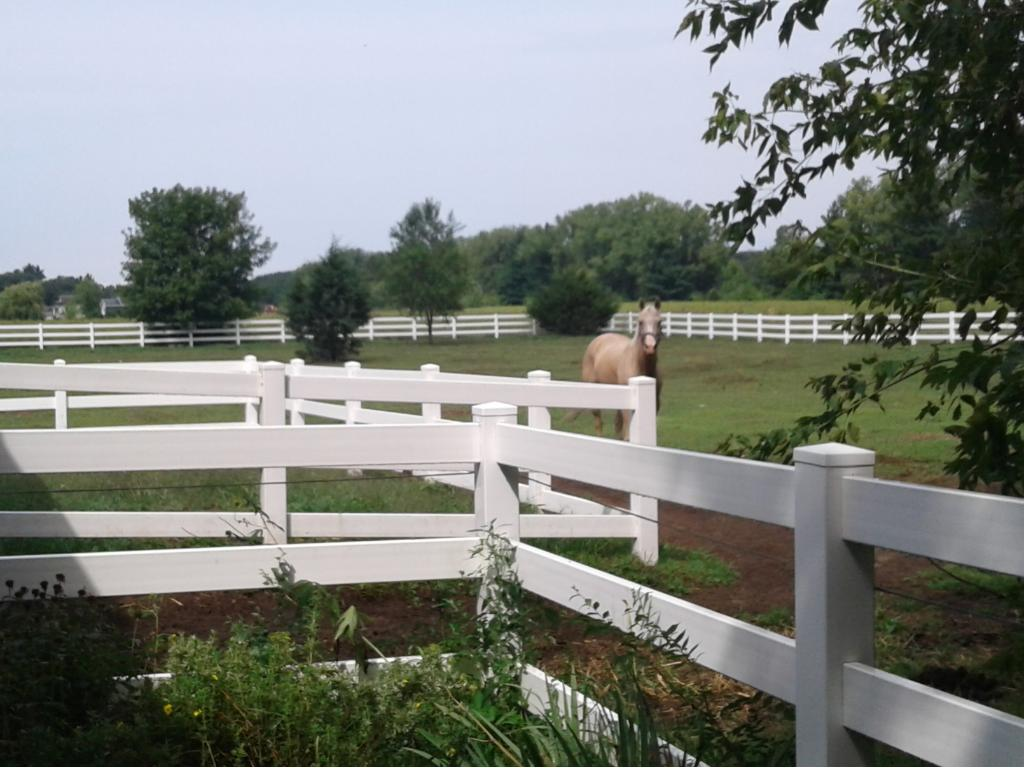 Close view of the sellers horse enjoying the pasture.