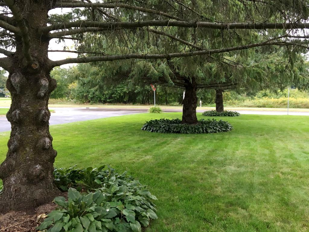 Mature trees throughout the yard are lined with hostas. Great corner lot with spacious side yards.