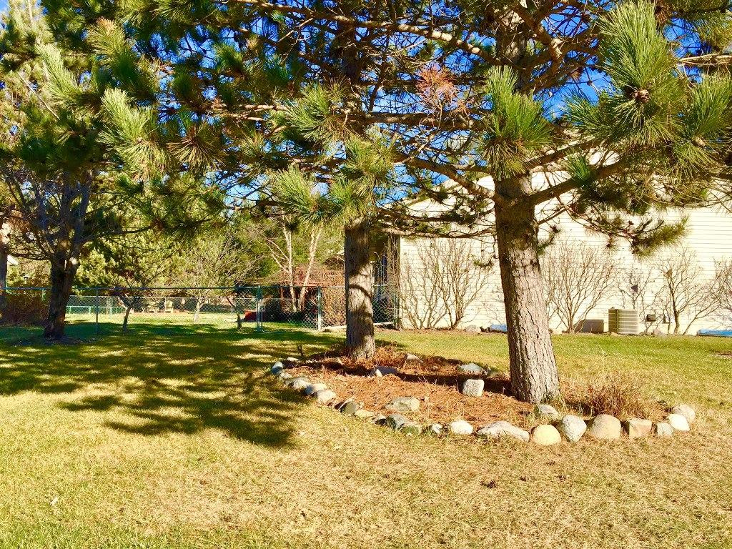 Nicely wooded side yard with large pine trees
