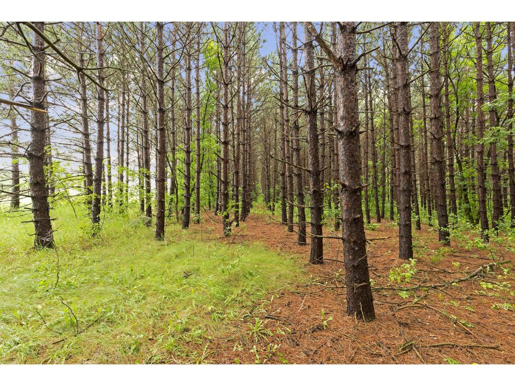 1297 Co Rd I, Hudson, WI 54016.  Land offers lots of privacy - enjoy nature and wildlife - and convenience of just minutes to Co Rd E or I-94.