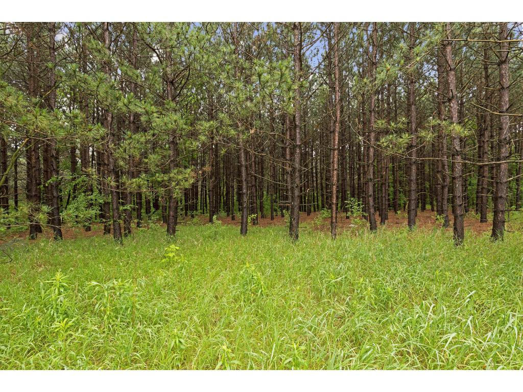 1297 Co Rd I, Hudson, WI 54016.  Heavily wooded parcel with white pine trees.  Ideal parcel with option of building your own estate and trails  or build and sell off part of land.