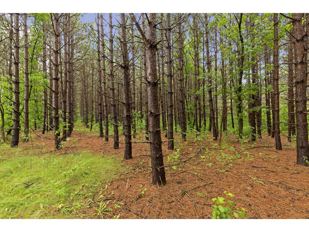 1297 Co Rd I, Hudson, WI  54016.  Bring your own builder and build on beautiful white pine wooded 15 acre parcel - convenient location and offers options to buyers.