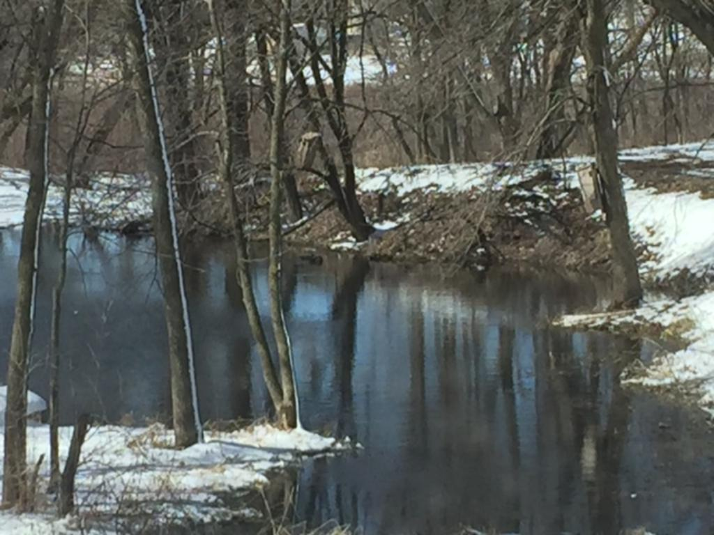 Winter view of the backyard pond.
