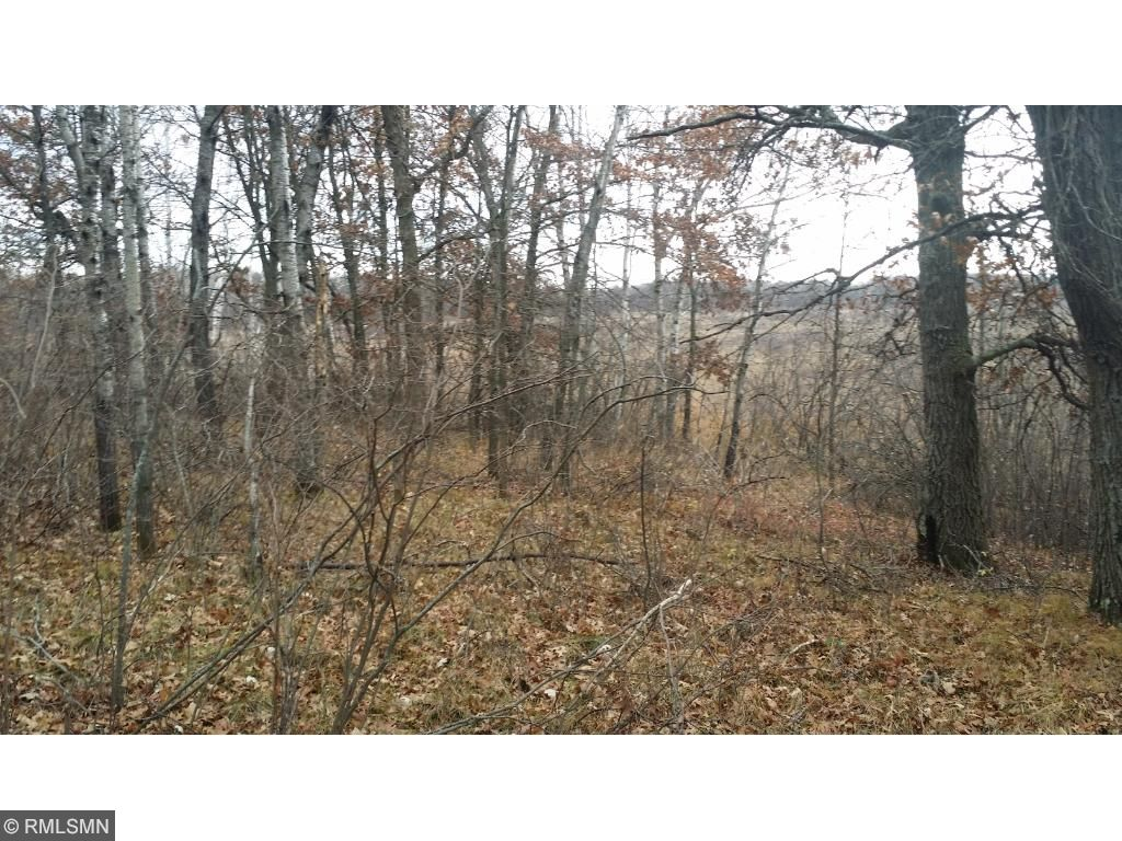 Much of the property is like this area beyond the trees.