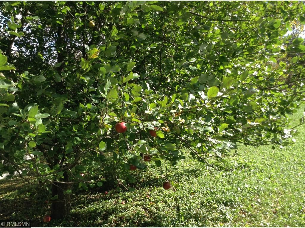 Apple, plum, walnut, butternut and flowering crab trees frame the yard