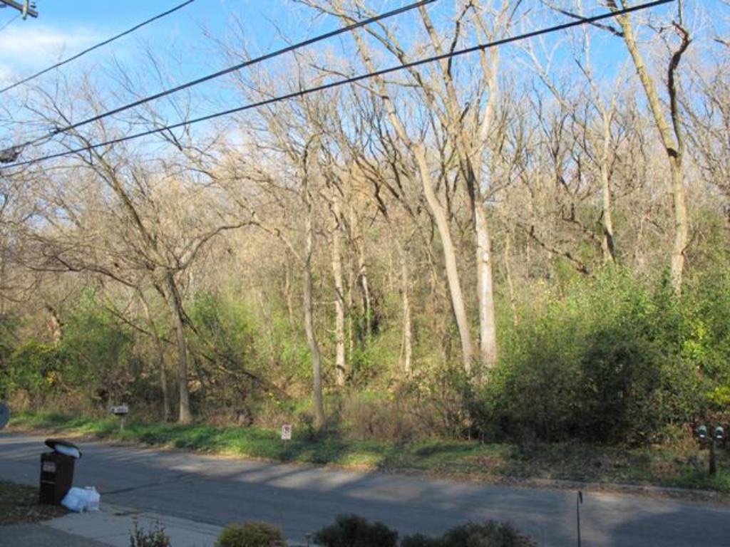 Wooded view across the street