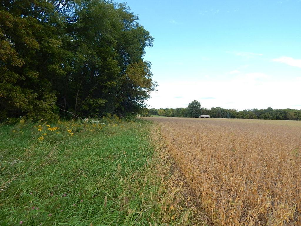 North facing photo of the eastern line of the sellers proposed 10 acre parcel.