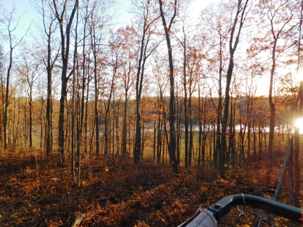 View from deer stand