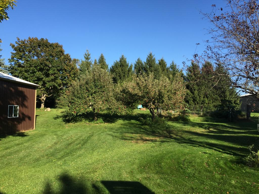 Wonderful 2+ acres surrounded by towering pines and blue spruce, fenced in garden area and apple trees. Storage shed in back.