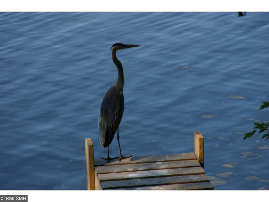 Enjoy the wildlife -- herons, duck, turtles and fish.
