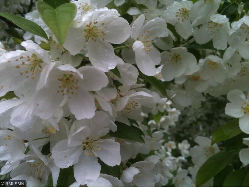 And a close up of the flowers.  You can almost smell them!  This home is waiting for you.  Come see it today!
