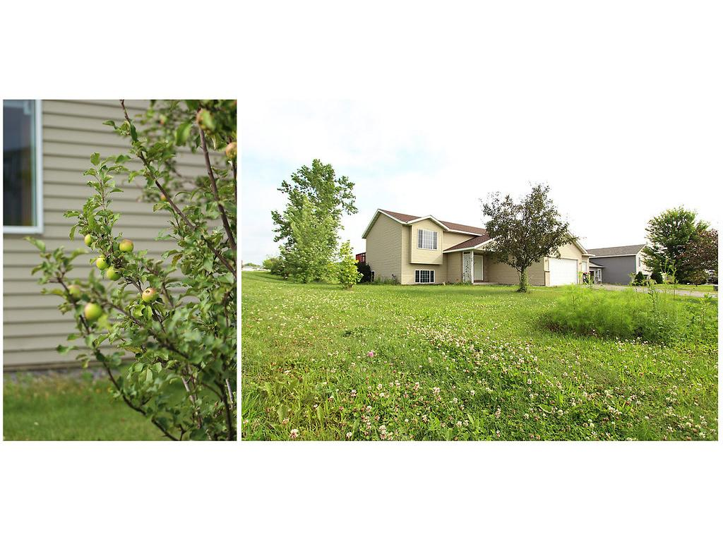 Great Yard with flower gardens and apple trees!