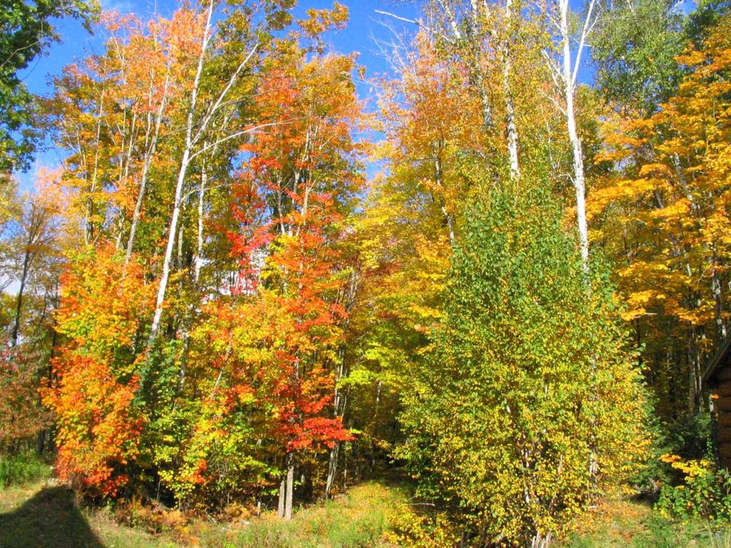 Beautiful fall foliage, walk the trails and enjoy the scenes on your 21 acres!