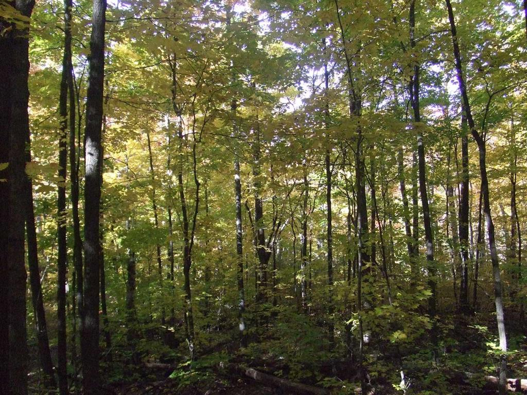 Trails allow for easy access during hunting season or those serene walks.