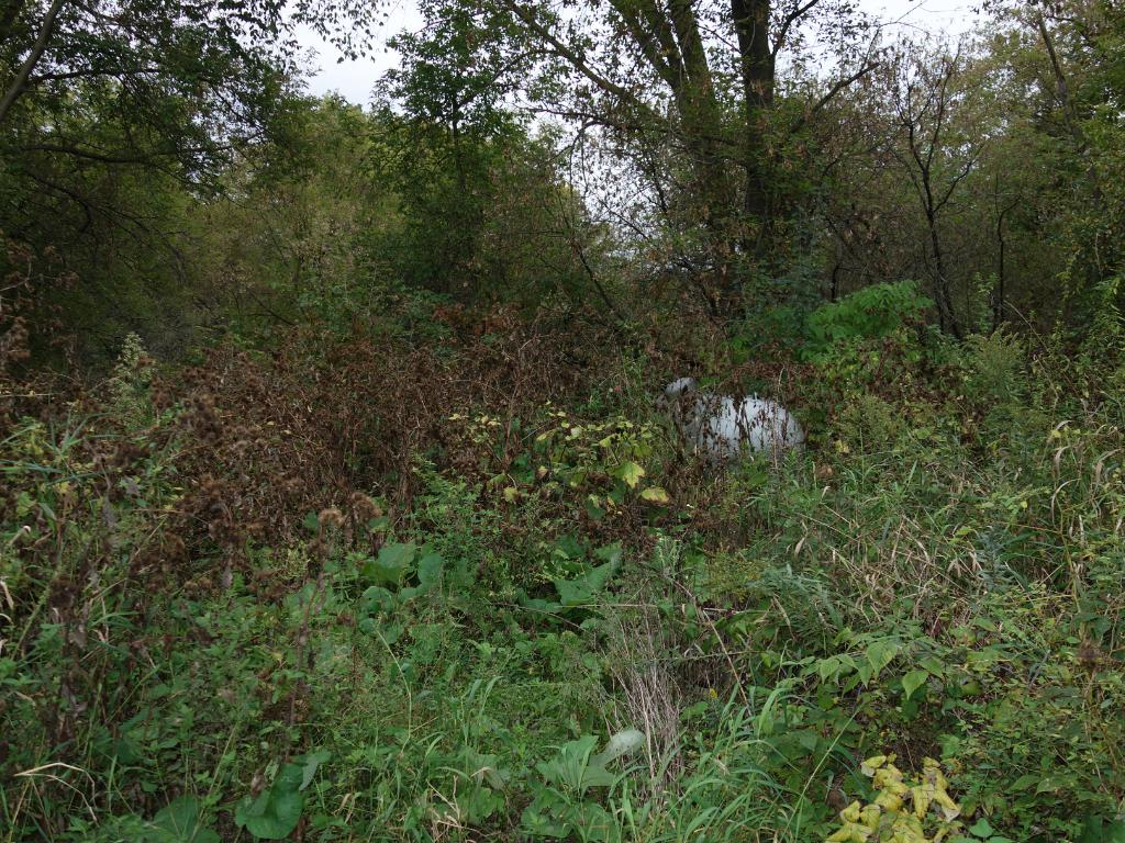 A view of the overgrown backyard - approx. 1 acre that abuts to Rock Creek.  Needs cleanup.