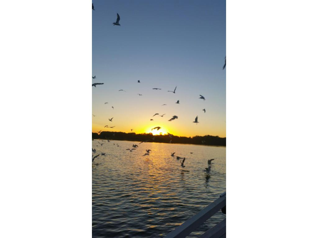 Captivating sunsets