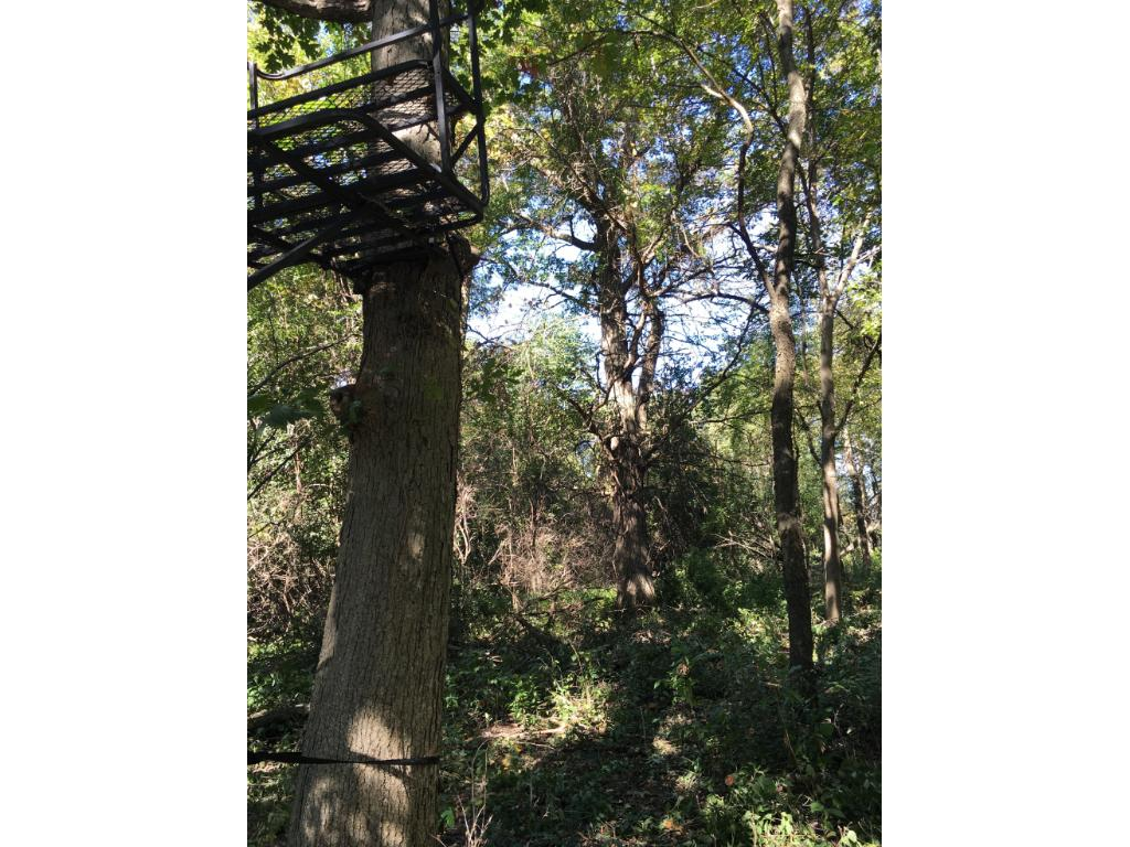 Large mature trees for deer stands