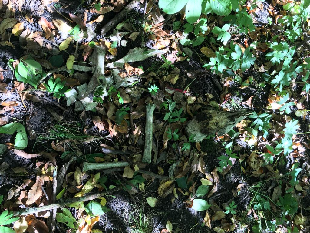 Deer bones found on property