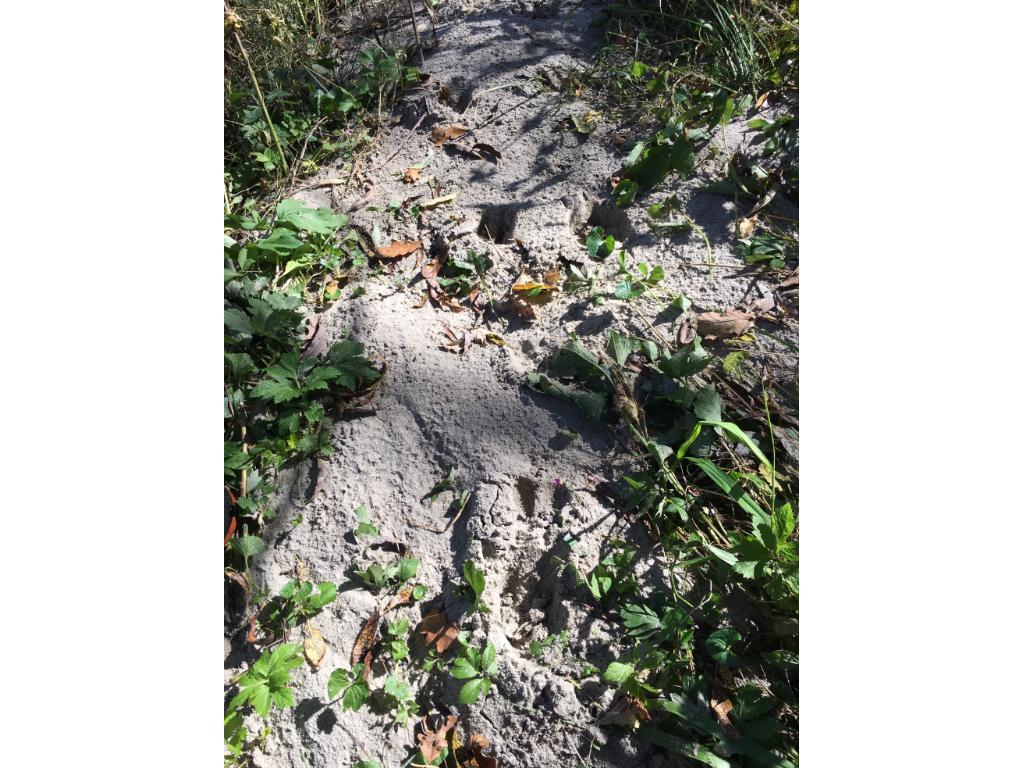 Deer Tracks near Rose Creek on property