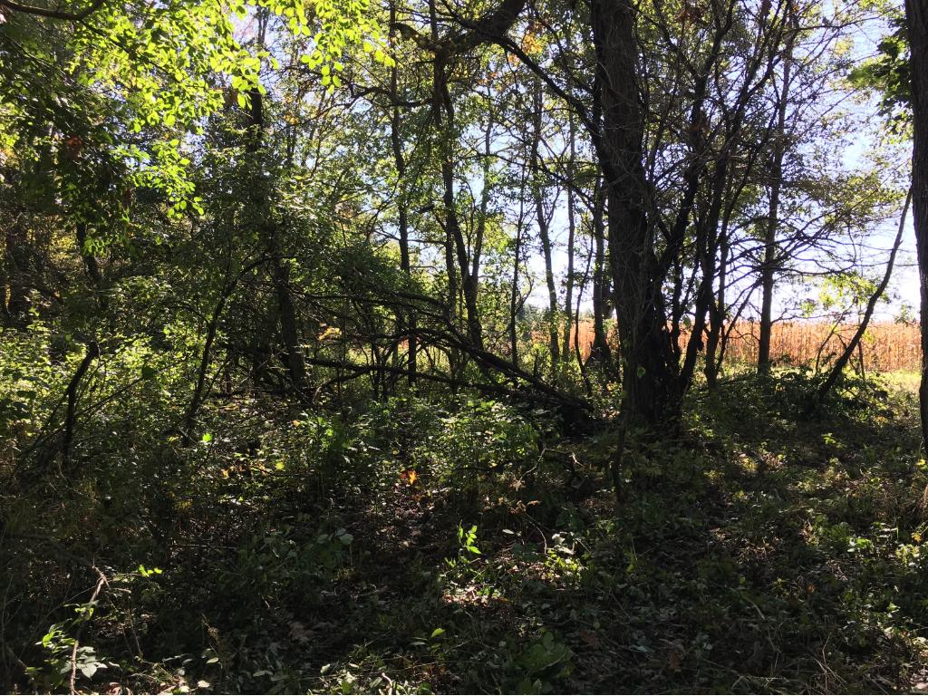 Wooded area where deer bed down