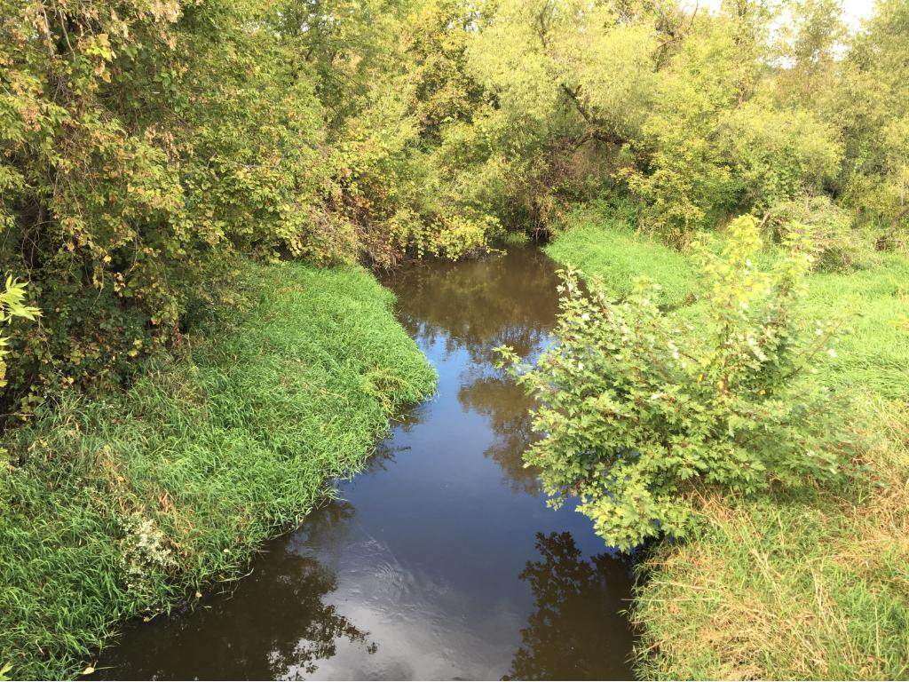 Chub Creek was named after the chub fish