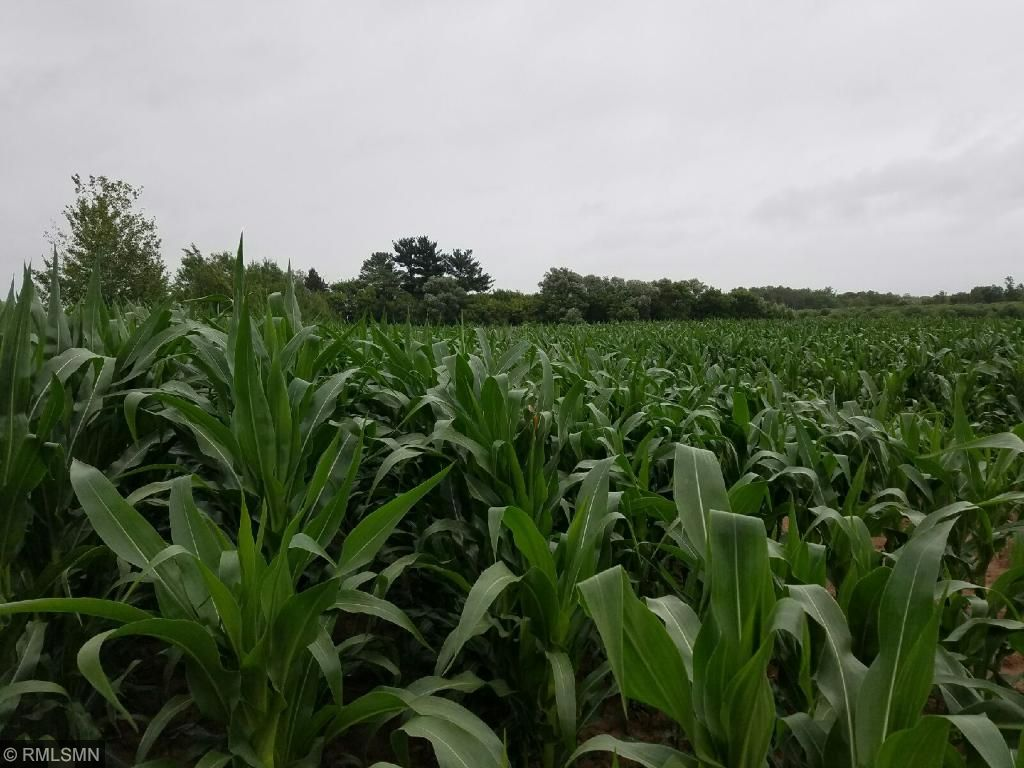 10 acres are being grown in corn!  Great way to bring in the wildlife.