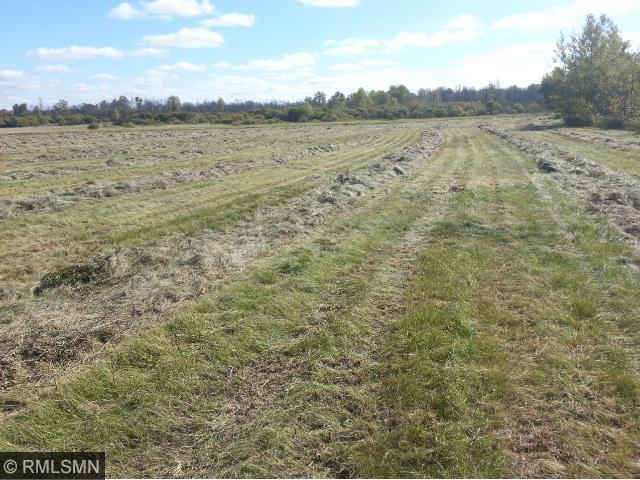 Large tillable field on the north portion of the property.